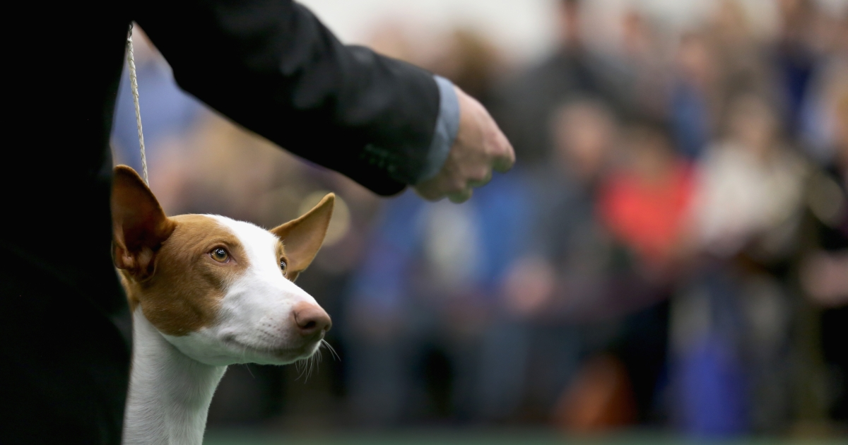 A new study has shown that dogs actually understand us better than we thought.</p>
