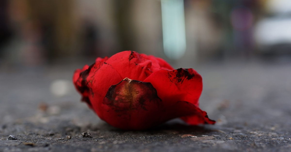 A discarded rose in New York City's floral district on Feb. 13, 2013.</p>