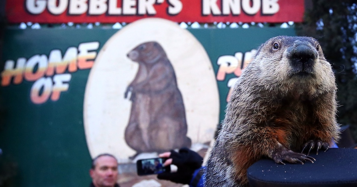 Groundhog Punxsutawney Phil climbs on the top hat of his handler after Phil did not see his shadow and predicting an early spring during the 127th Groundhog Day Celebration at Gobbler's Knob on February 2, 2013 in Punxsutawney, Pennsylvania.</p>