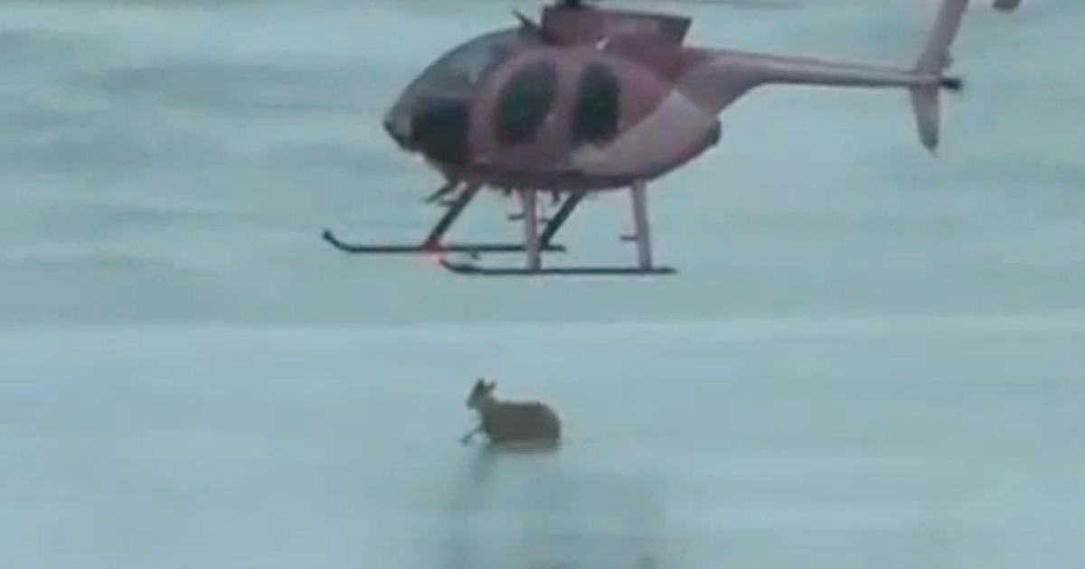 Videographer Ian Waugh captured this video of helicopter pilot David Farrell rescuing a deer trapped on a frozen lake in Nova Scotia, Canada.</p>