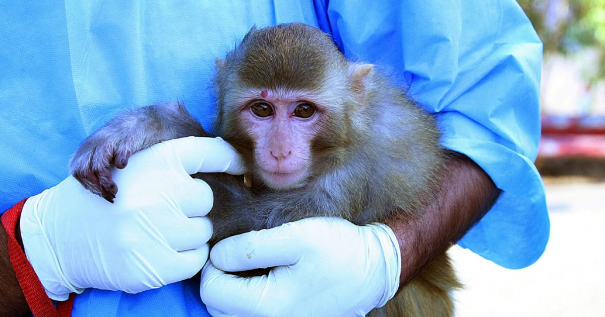 An Iranian scientist holds a live monkey at an unknown location on January 28, 2013, which Iranian news agencies said returned alive after it traveled in a capsule to an altitude of 120 kilometres (75 miles) for a sub-orbital flight. Iran took a