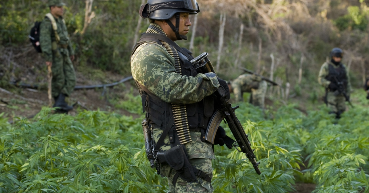 A Mexican soldier stands guard at a marijuana field raid in Sinaloa state on Jan. 30, 2012. Compared to its humble beginnings in the 1980s, when it controlled only a single trafficking route into Arizona, the Sinaloa cartel now controls most of Mexico's Pacific coast states and parts of central Mexico.</p>