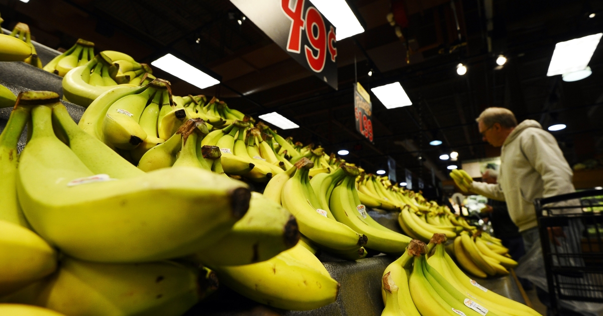 A large shipment of cocaine was discovered in a crate of bananas at a Coop supermarket chain in Aarhus, apparently having been forgotten by drug smugglers.</p>