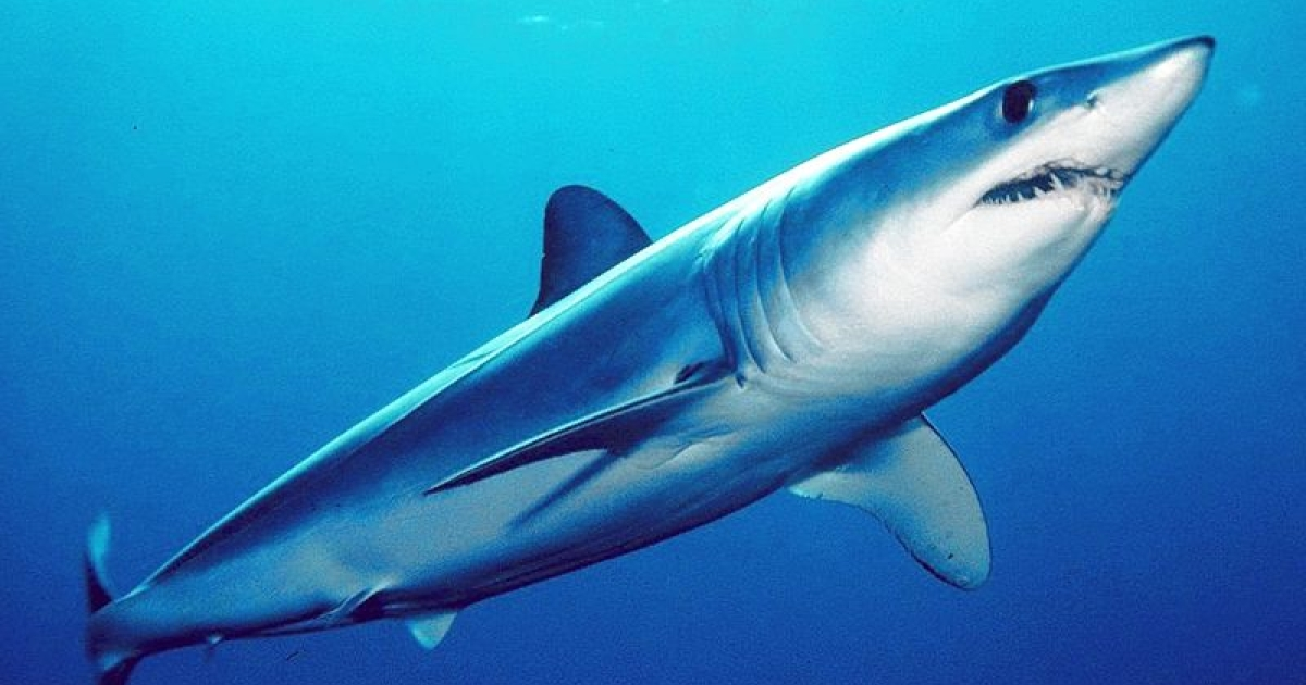 Say goodbye to wrinkles with shark sperm. At least one Mexican politician swears by it.</p>