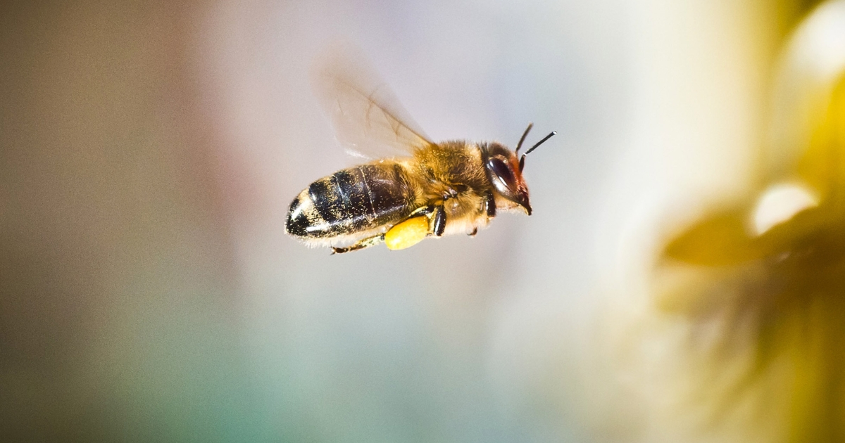 Scientists at Newcastle University found that plants add addictive substances like caffeine to continually lure bees back.</p>