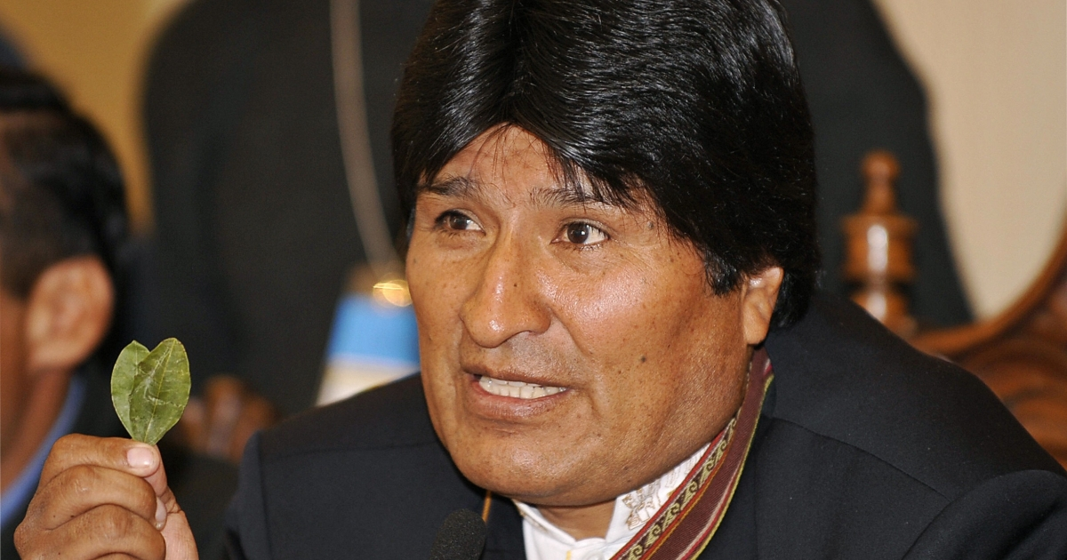 Evo Morales holding coca leaves. He's defended Bolivians' right to cultivate the plant.</p>