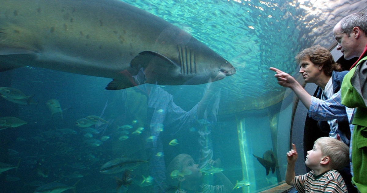 Families watch as a ragged tooth shark swims at Two Oceans Aquarium in Cape Town, South Africa on April 29, 2001.</p>