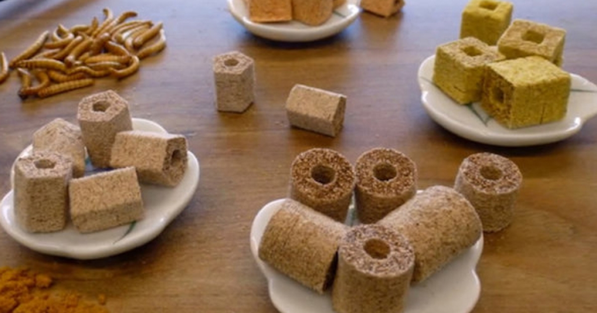 Bon appetite! This photo shows food made with a 3-D printer using meal worms.</p>