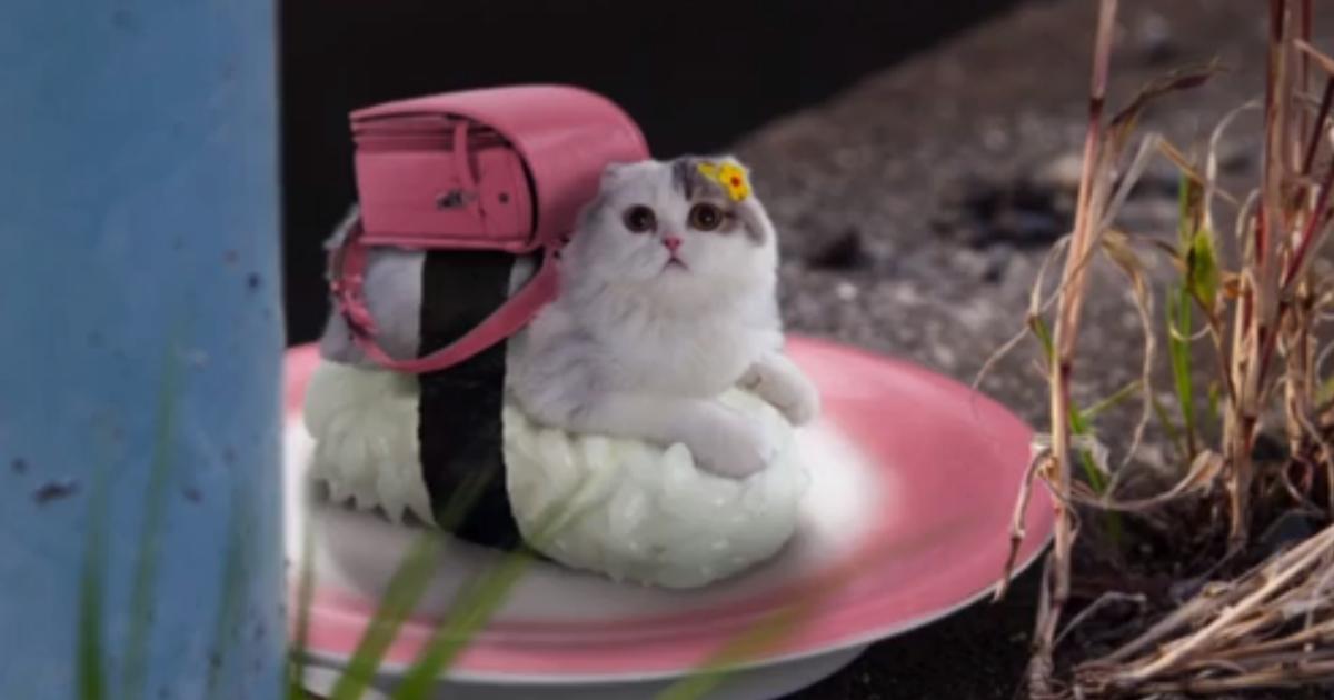 Japanese peanut company creates sushi cats. We still don't understand why.</p>