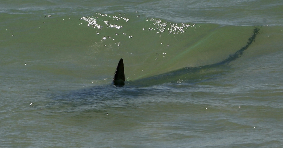 The attack happened at a Florida beach, renowned for its bull sharks.</p>