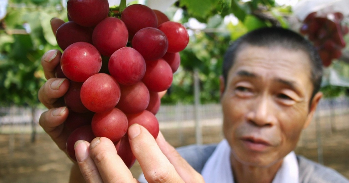 Japanese farmer Tsutomu Takemori displays a cluster of recently-developed
