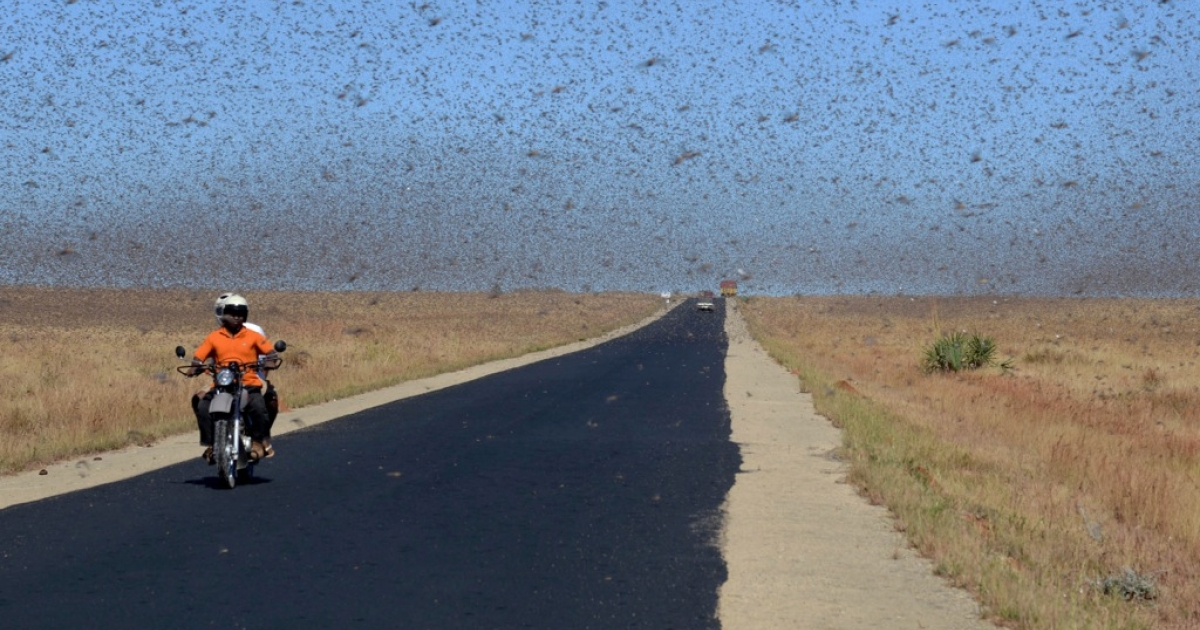 Red locusts swarm 20 kilometers north of Sakaraha, a town in southwest Madagascar, on April 27, 2013. According to studies, there were around 500 billion locusts in the country at the time, eating around 100,000 metric tons of vegetation per day.</p>