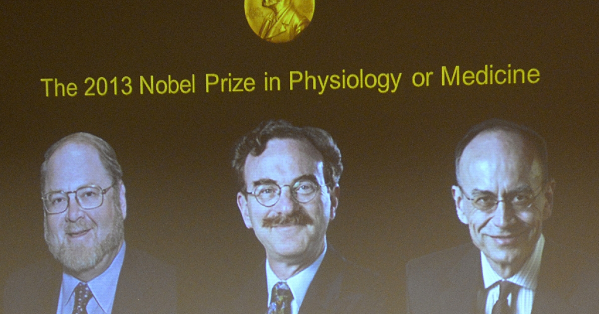 A screen displays photos of (LtoR) James E. Rothman from the US, Randy W. Schekman from the US and Thomas C. Suedhof from Germany, all joined winners of the Medicine Nobel Prize, at a press conference to announce the laureates the 2013 Nobel Prize in Physiology or Medicine on October 7, 2013.</p>