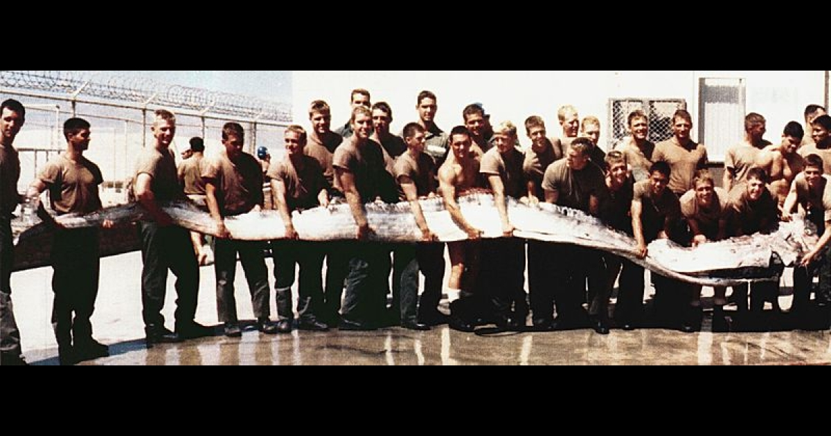 A rare oarfish found in San Diego in 1996.</p>
