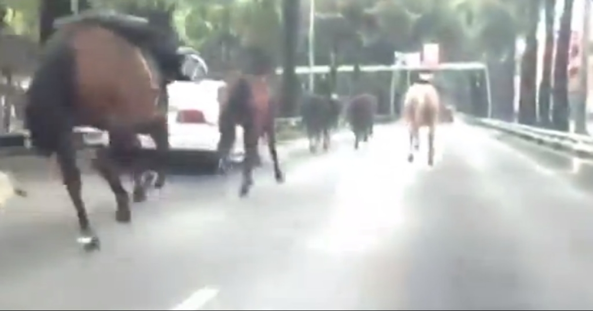 Residents of Mexico City got a scare on September 2, 2013, when 30 police horses escaped their handlers and stampeded down one of the capital's busiest avenues, damaging 11 cars and injuring one person.</p>