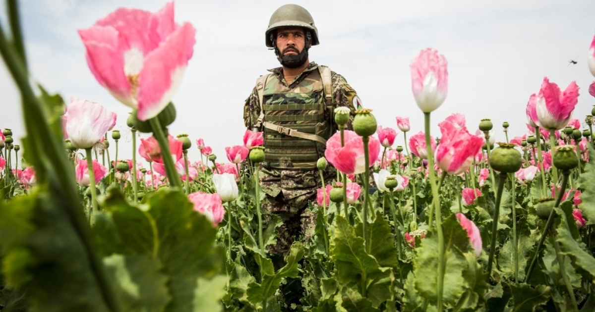 An army soldier walks through a poppy field during a joint patrol with the US Army near Pa'in Kalay in Kandahar province.</p>