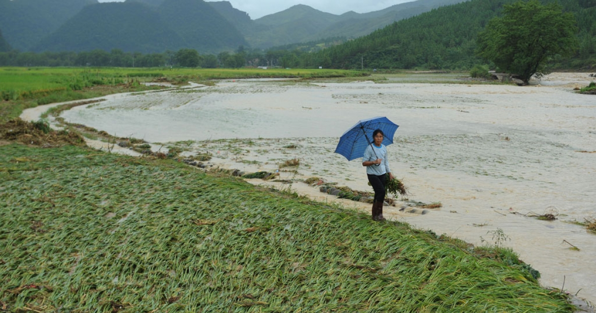 This picture taken on Aug. 18, 2013 shows a villager holding seedlings from her damaged farmland after flooding hit central China's Hunan province.</p>