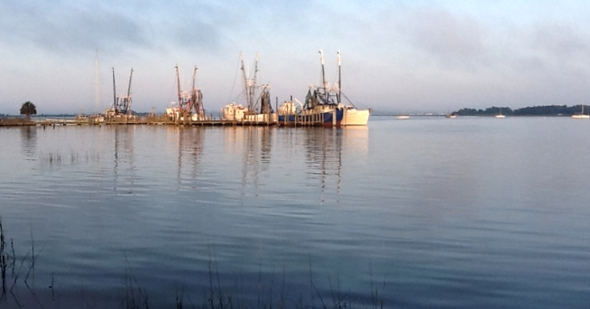 Fernandina shrimping fleet.</p>