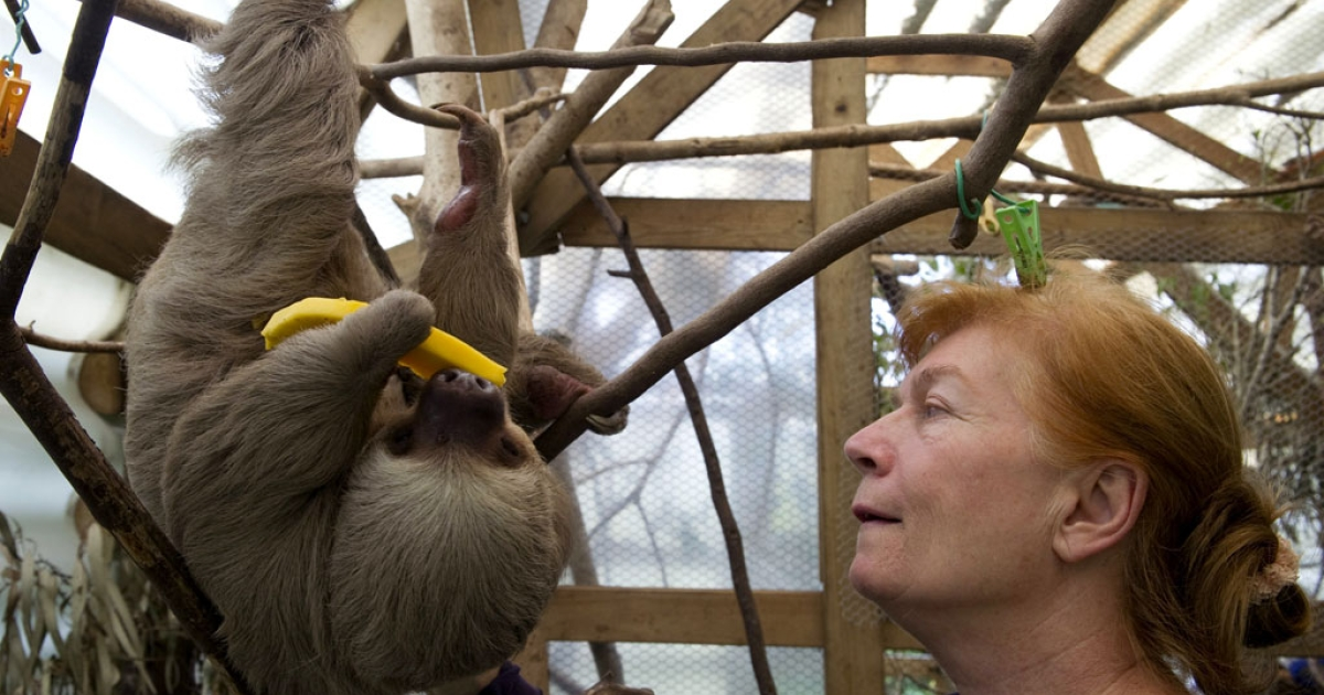 A scientist and a baby two-toed sloth in Colombia.</p>