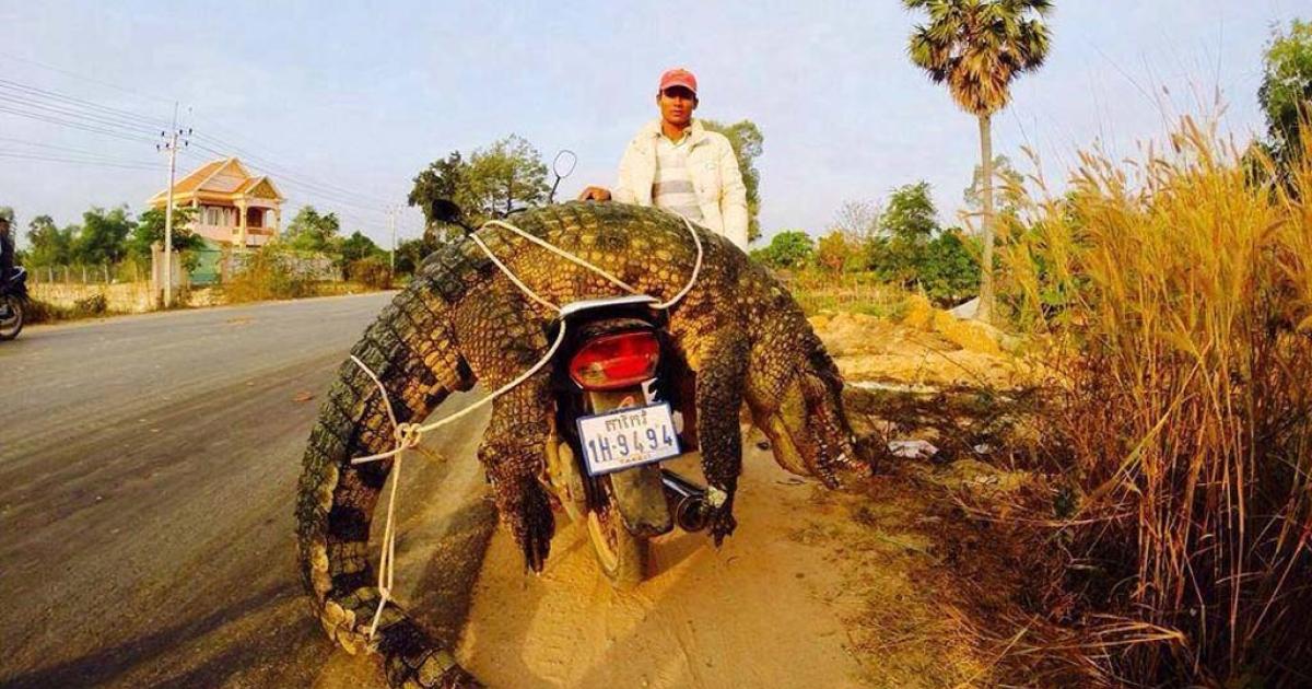 Siem Reap, Cambodia.</p>