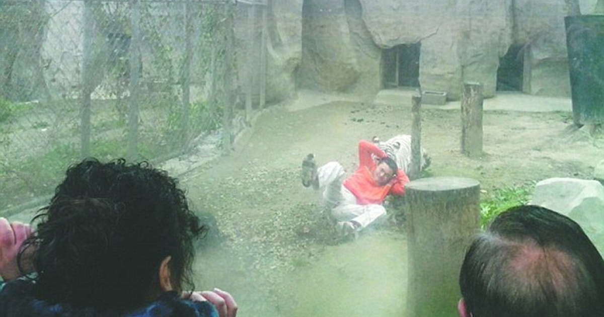 Onlookers watched in horror as a 27-year-old depressed fctory worker tried to feed himself to a pair of Bengal tigers at a zoo in China's Sichaun province.</p>