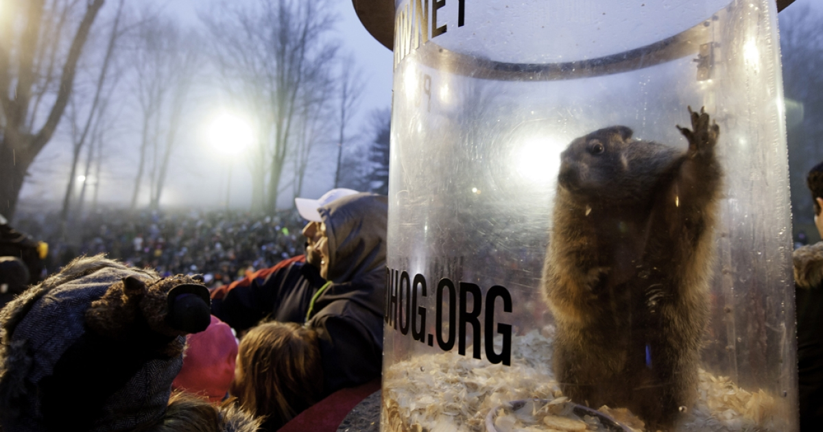 Punxsutawney Phil during the 128th annual Groundhog Day festivities on Feb. 2, 2014, in Punxsutawney, Penn.</p>