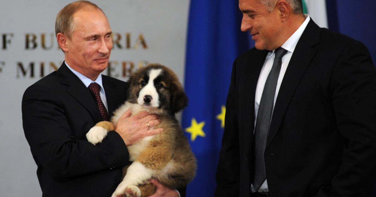 Russia's Vladimir Putin holds Buffy the Bulgarian shepherd dog, a gift from Bulgarian Prime Minister Boyko Borisov in November 2010.</p>