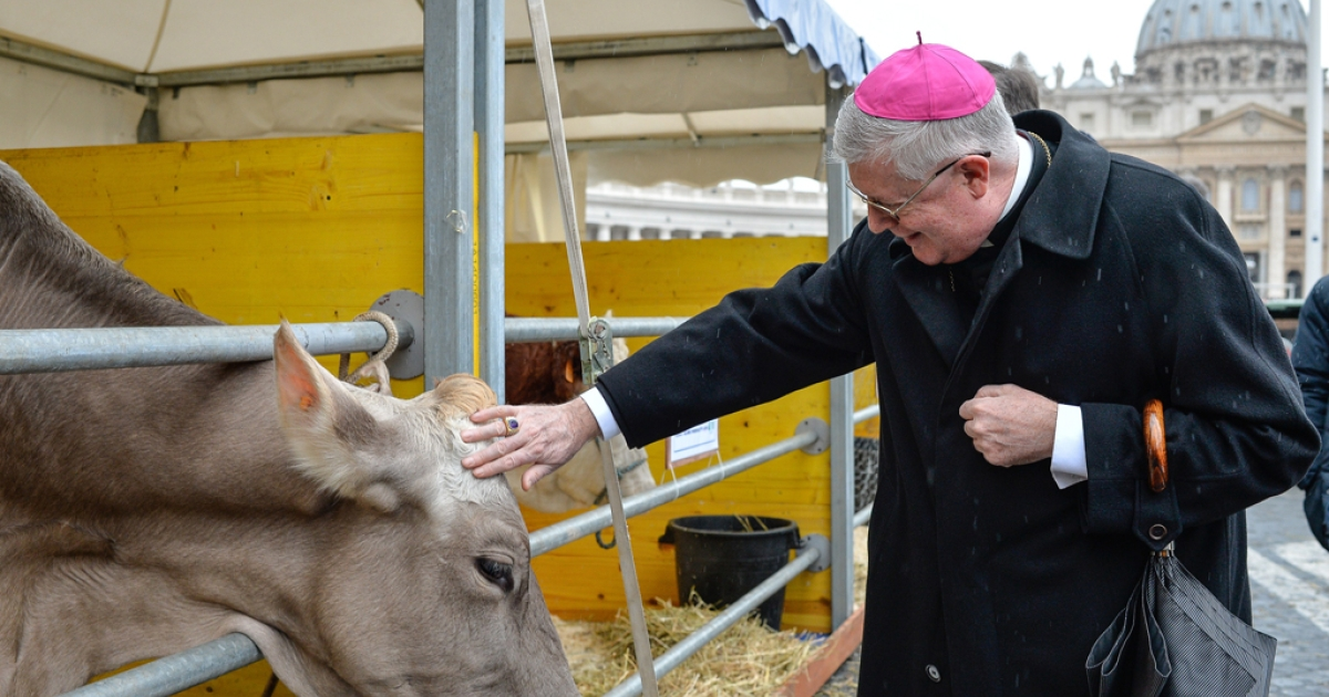 Italian bishop Guido Pozzo pets a cow in front of the Saint Peter Basilica at the Vatican, during the traditional feast day of Saint Anthony Abbot, the patron saint and protector of animals, on January 17, 2014.   AFP PHOTO / ANDREAS  SOLARO        (Photo credit should read ANDREAS SOLARO/AFP/Getty Images)</p>