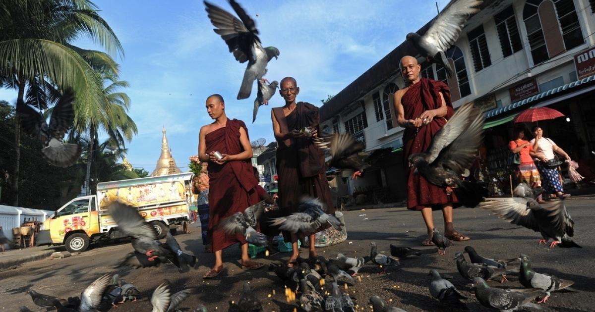 Buddhist monks feed pigeons near the Shwedagon pagoda in Yangon on May 9, 2014.</p>