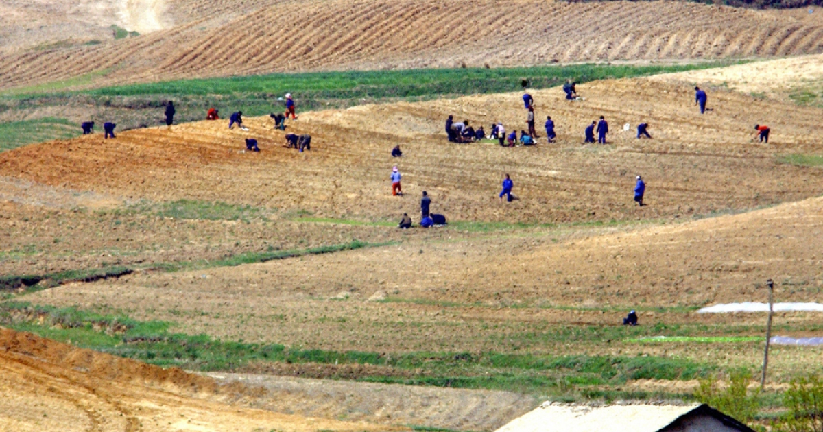 North Koreans work the field of Kijong-dong, inside the Demilitarized Zone (DMZ) between North and South Korea, April 28, 2004.</p>
