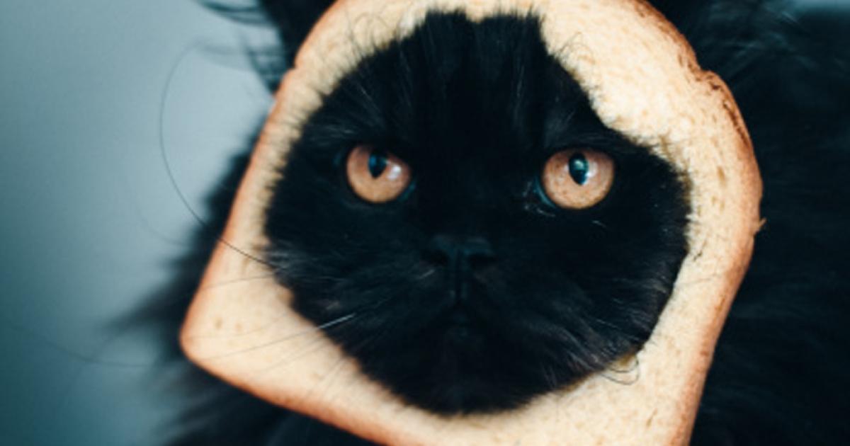Cat sandwich</p>