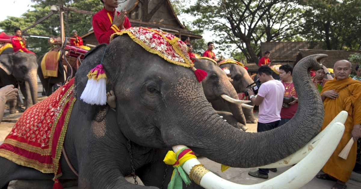 Thai mahouts pray while sitting on their elephants as part of the elephant banquet to mark