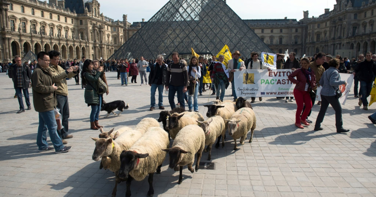 Tourists take photos as French farmers of the Farmers Confederation demonstrate with a flock of sheep outside the Louvre museum on March 28, 2014, in Paris.</p>