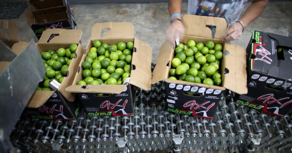 Limes that have been imported from Columbia are boxed at Samex Produce in Miami, Florida, on March 26, 2014.</p>