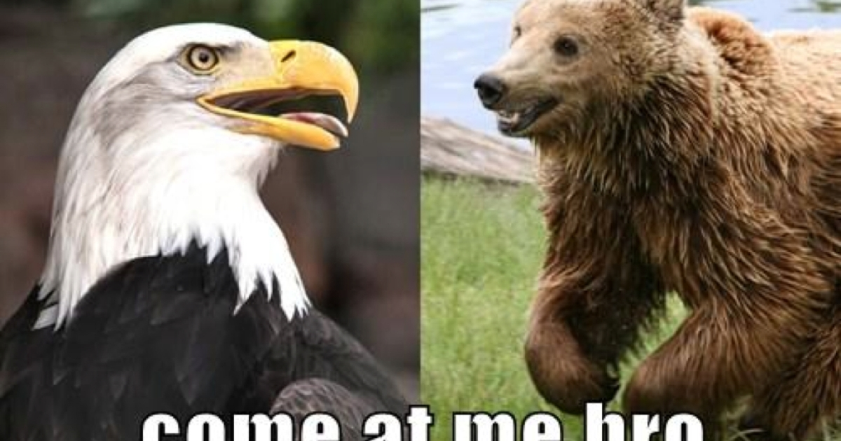 Left: Bald Eagle (William Warby via Flickr Commons). Right: Brown Bear (Wikimedia Commons).</p>