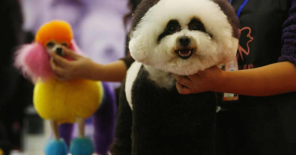 Dogs prepare to take part in a pet beauty show during the sixth China Pet Fair in Wuhan. The Communist Party denounces pet dogs as a filthy western import.</p>