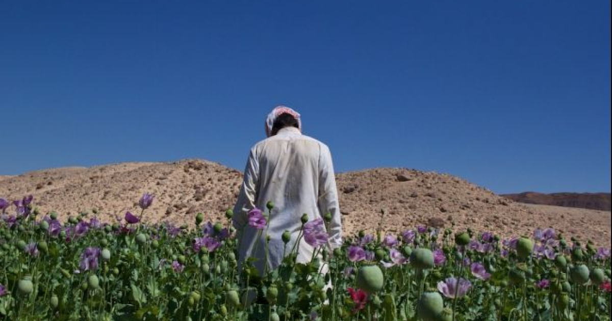 <span>Mohamed, 26, used to take tourists on week-long safaris into the South Sinai mountains but now grows opium to make a living.</span></p>