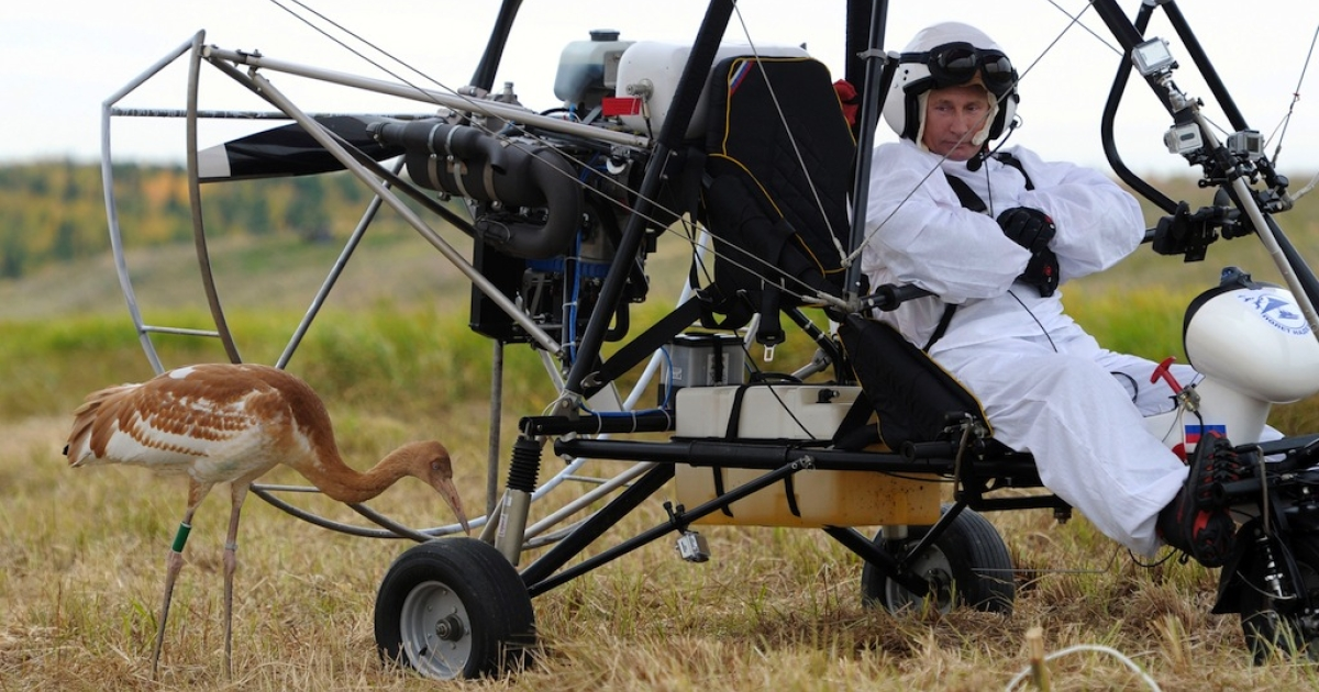 Russian President Vladimir Putin glares at a crane as he takes part in a scientific experiment as part of the 'Flight of Hope' on on Sept. 5, 2012. The project will help preserve a rare species of cranes in the Jamalo-Nentsky region. Putin made three flights - the first to learn the process, and two others with the birds.</p>
