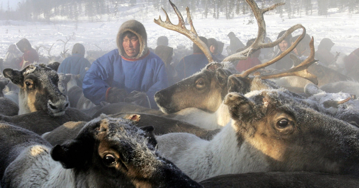 Reindeer herders in the remote corner of northern Siberia stumbled upon the giant crater.</p>