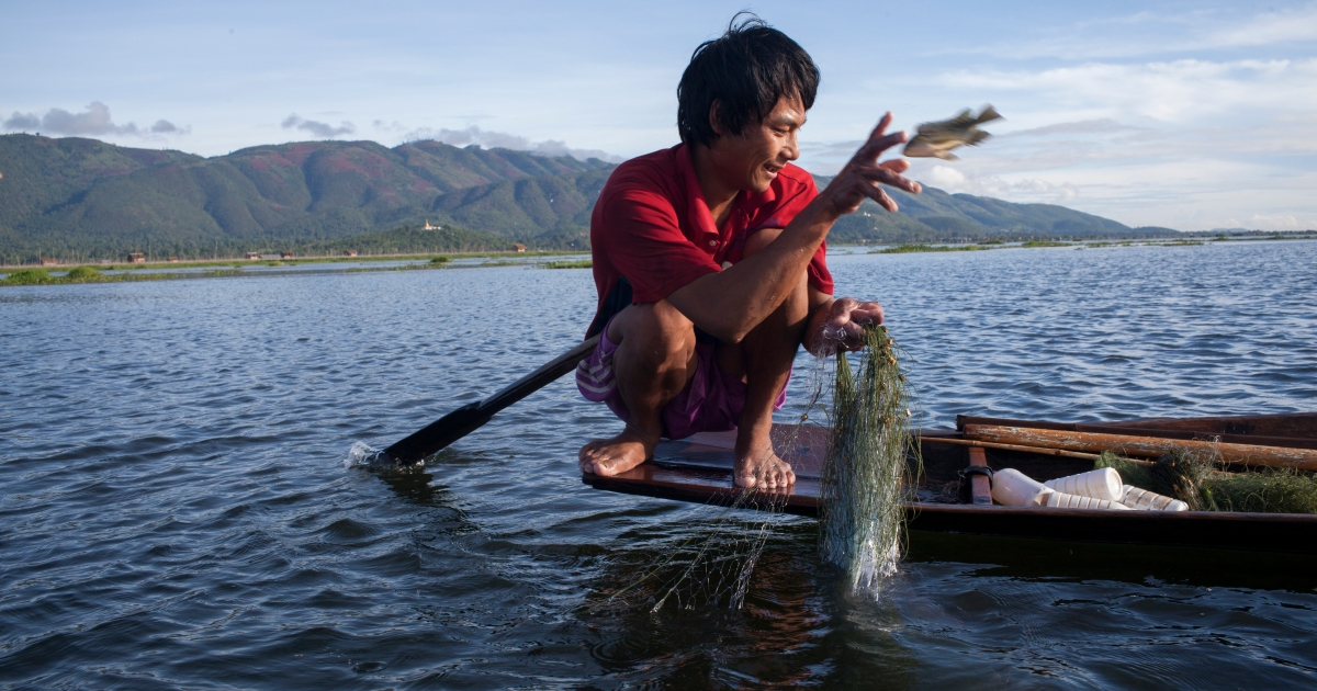 A fisherman works on Inle lake in Southern Shan State, Myanmar.</p>