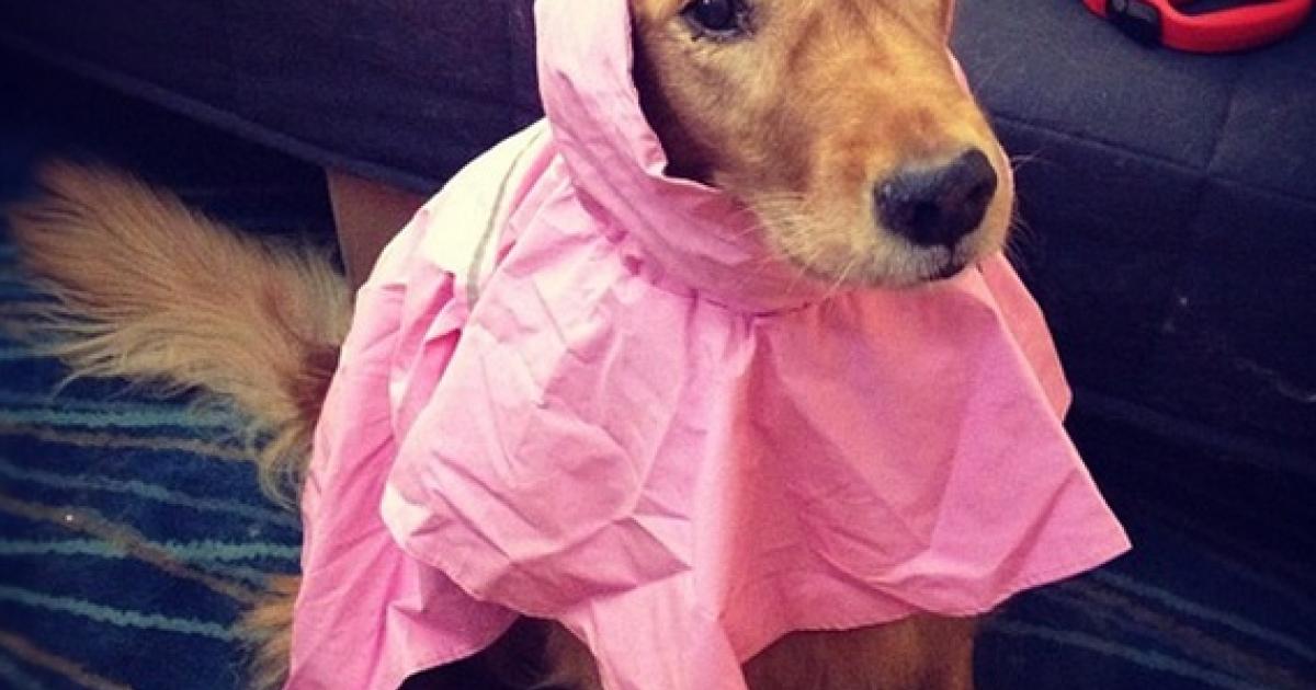 Sandy shmandy! Ready to take on the Frankenstorm! Instagram photo by @mandysea (mandysea).</p>