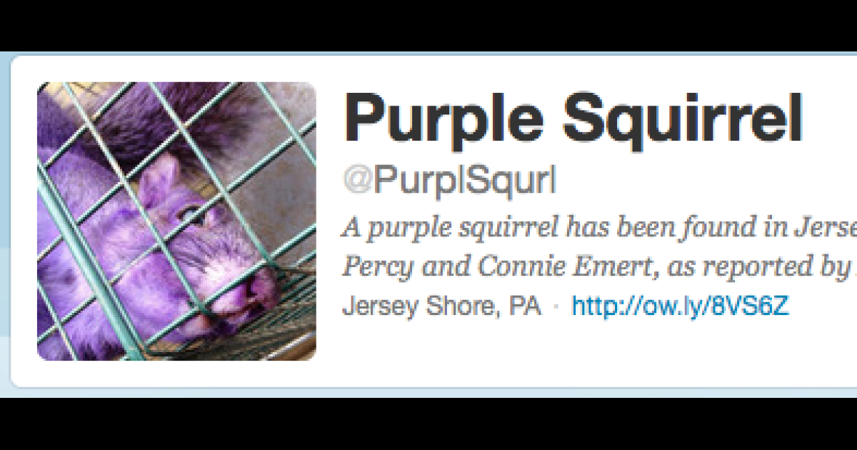 A purple squirrel was found in Pennsylvania. Soon after his discovery he was set up with a Twitter account.</p>