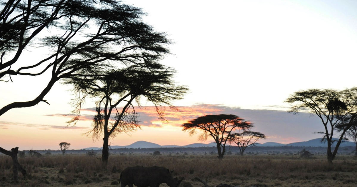 A Rhino grazes during the early morning hours at the Lewa Wildlife Conservancy on December 10, 2010.</p>
