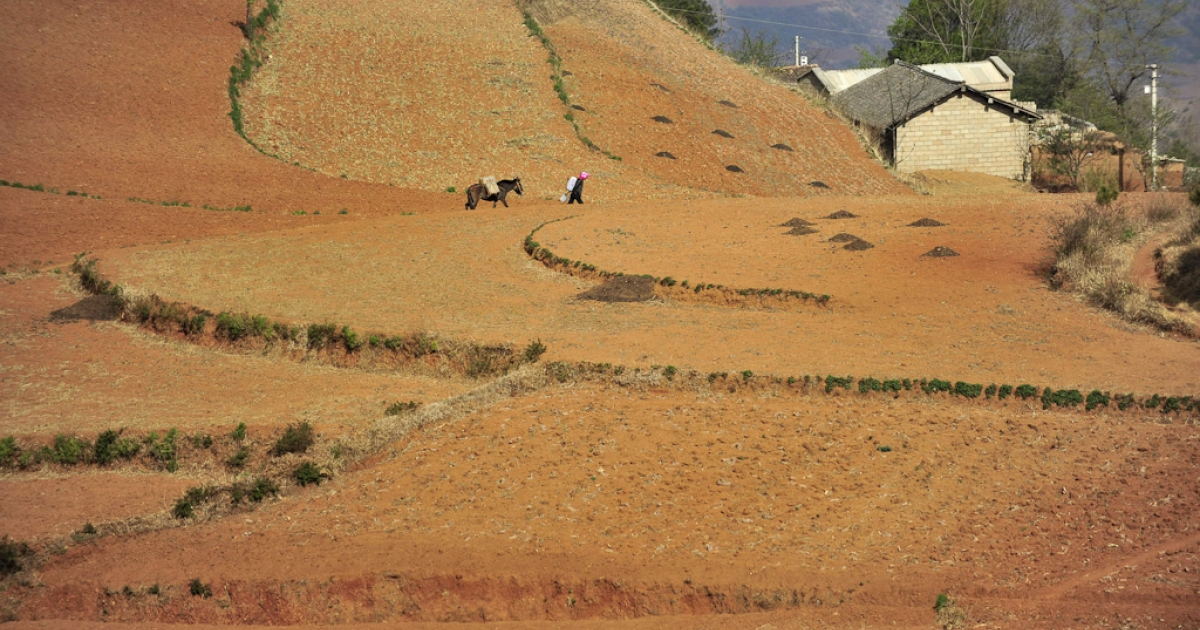 A Chinese villager uses her mule to carry barrels of water collected from an underground well miles away from her village during a severe drought in Kunming, southwest China's Yunnan province. March 31, 2010.</p>
