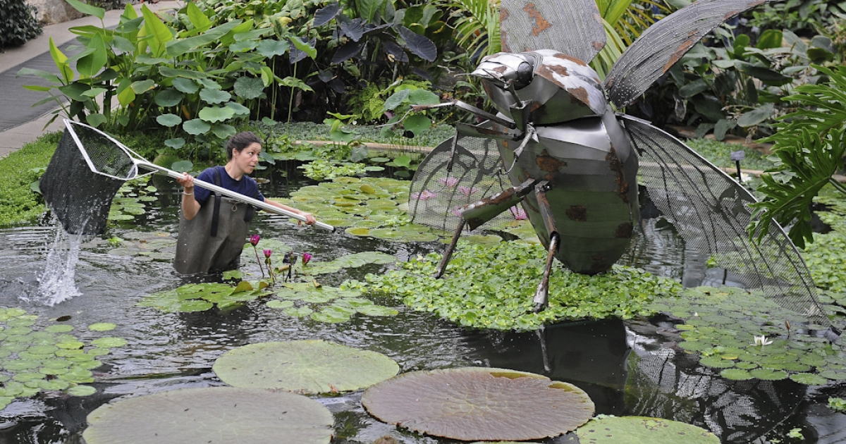 Employee Amy Mordan stands in a lily pond with a giant beetle metal sculpture, as she poses for photographers during a photocall at Kew Gardens in London on May 27, 2010. A swarm of what may be Tasmanian grass grub beetles showed up on radar in New Zealand on Feb 21 and 22, confusing weather-watchers.</p>