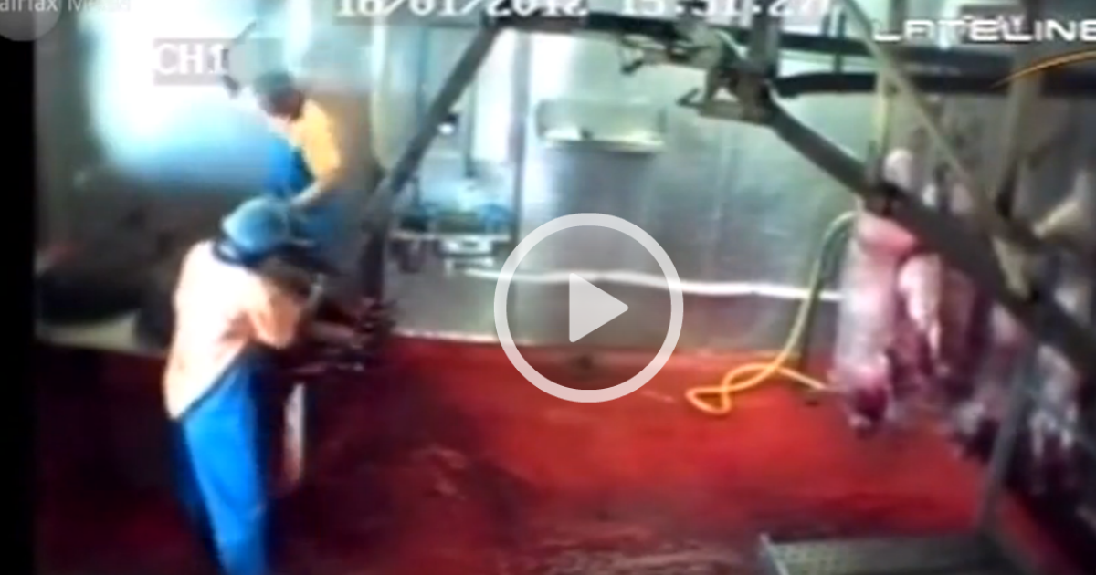 Video from a Sydney slaughterhouse shows apparent extreme cruelty.</p>