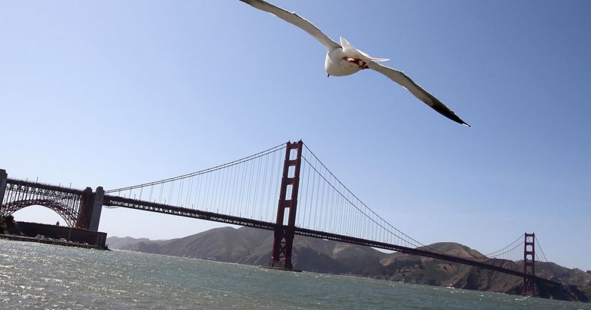 A seagull flies near the Golden Gate Bridge on May 24, 2012 in San Francisco, California.</p>
