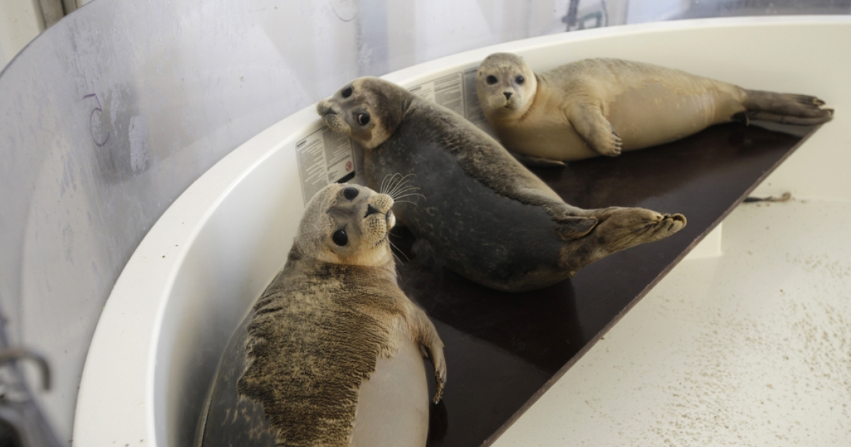 162 seals died off the coast of New England due to a new strain of influenza. Researchers believe this may be a sign that the virus might be capable of transferring to humans.</p>