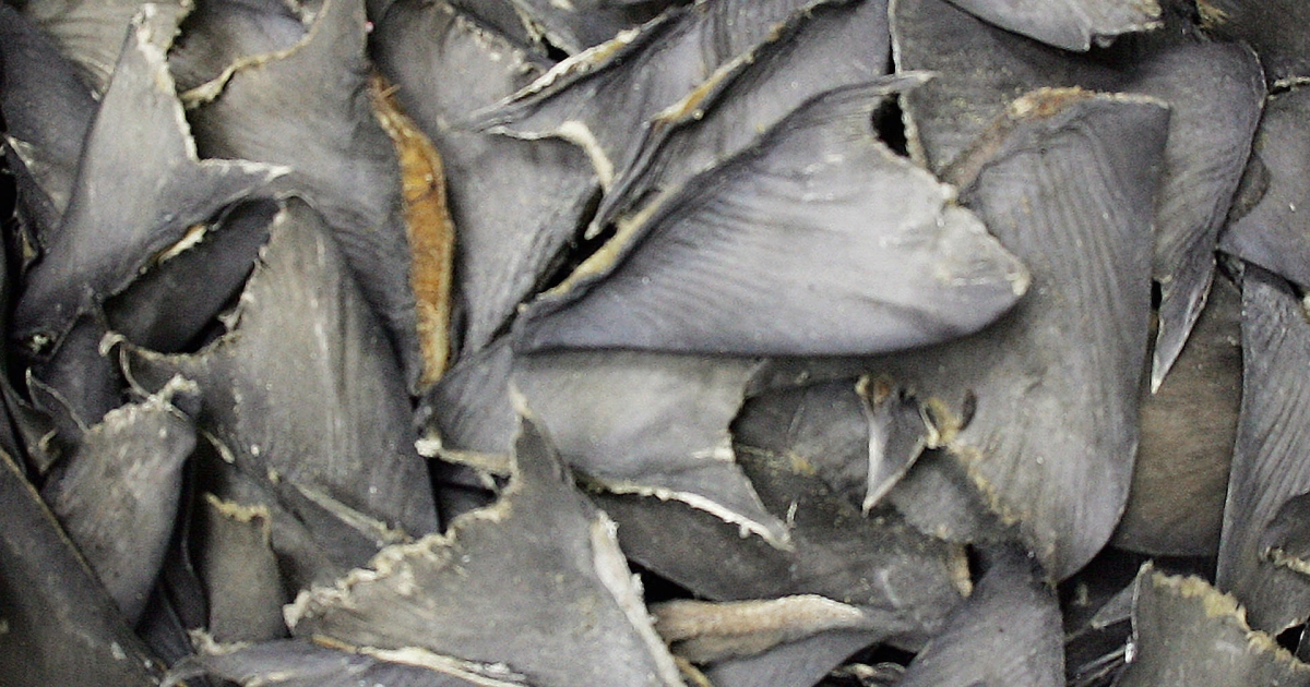 Shark fins in a bag await delivery at a wholesale warehouse in Hong Kong, where they will be used for dishes like shark fin soup. Conservationists have fought to stop the practice of shark finning.</p>
