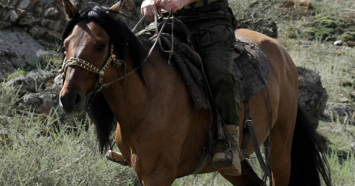 Russian Prime Minister Vladimir Putin rides a horse during his vacation outside the town of Kyzyl in Southern Siberia on August 3, 2009.</p>